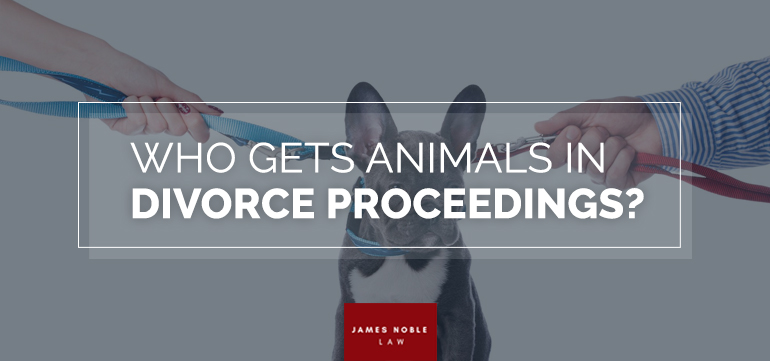 Animals in Divorce Proceedings